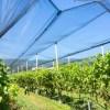 Mejora la gestión de riego en viñas y campos frutales a través de una plataforma web