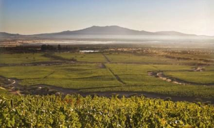 Viña Estampa obtiene Código Nacional de Sustentabilidad de la industria vitivinícola chilena