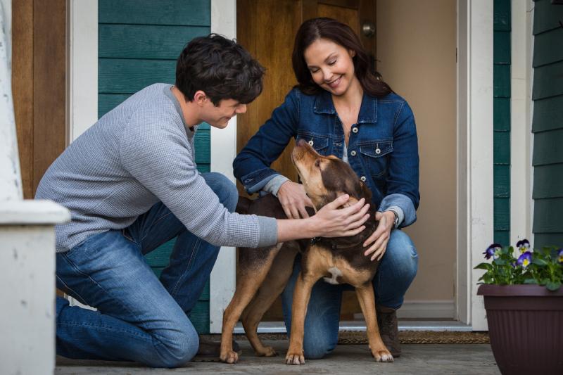 """""""Mis Huellas a Casa"""" llega a los cines con una linda jornada de adopción de Corporación Mirada Animal"""