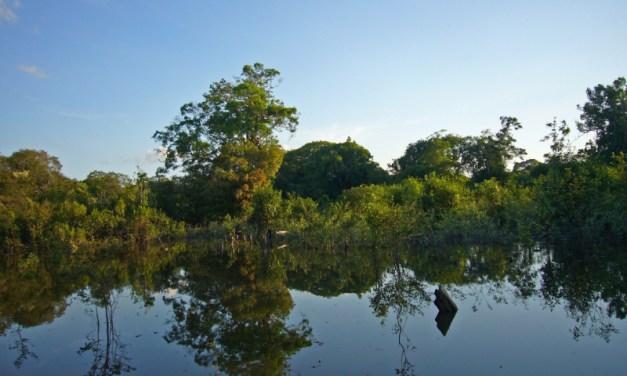 Signify logra neutralidad de carbono en sus operaciones en Latinoamérica