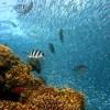 Ocho medidas urgentes para preservar el buen funcionamiento del océano, imprescindible para la vida del planeta