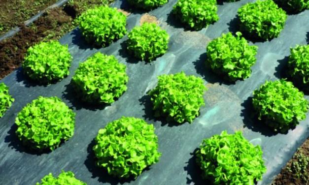 Film para cubierta vegetal (mulching) biodegradables en pro de una agricultura sostenible