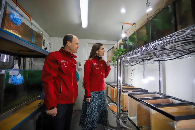 Anuncian medidas para recuperación de la rana del Loa