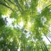 Cada persona tiene que plantar 6 árboles al mes para compensar las emisiones de CO2