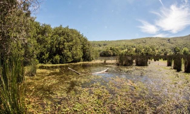 Declaración de El Natri como Santuario de la Naturaleza se publicó en Diario Oficial
