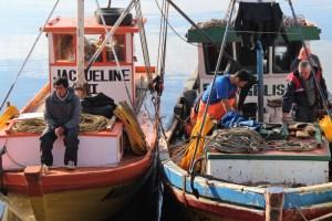 Pescadores artesanales de Maullín obtienen certificación Fair Trade para comercializar locos
