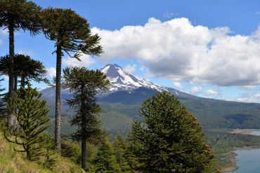 Sector turístico de la Araucanía apuesta por la sustentabilidad para la reactivación post pandemia