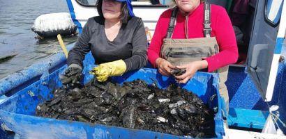Pescadores pondrán en práctica modelo productivo y comercial para reactivar la ostricultura en la Región de Los Ríos
