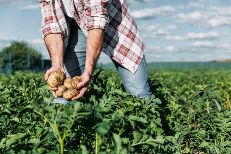Programa Chile Origen Consciente: aumentar la productividad del sector agroalimentario chileno de manera sustentable