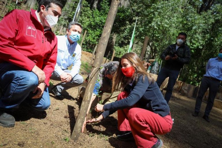 Cubiertos de madera sustentable de la Compañía Chilena de Fósforos y reforestación nativa con Fundación Reforestemos: Ministra de Medio Ambiente destaca iniciativas de desarrollo sustentable en Maule y Biobío