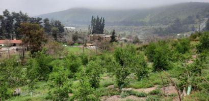 Biocys: Tras 4 años de trabajo logran reforestar Cerro Chequén afectado por grave incendio forestal