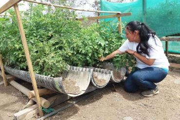 Ingeniosa técnica usa solo 2 litros de agua diarios para cultivar forraje verde para 140 animales