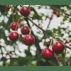 Exportadores de alimentos apuestan por nuevos sistemas de desinfección tras crisis de cerezas chilenas en China