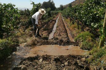 Viña TerraMater: producción ecológica de vinos y aceites de oliva