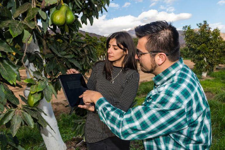 Kilimo, startup desarrolló una plataforma digital para la gestión inteligente del riego en agricultura