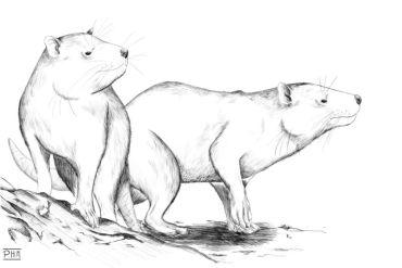 Investigadores descubren nuevo mamífero de la Era de los Dinosaurios en la Patagonia Chilena