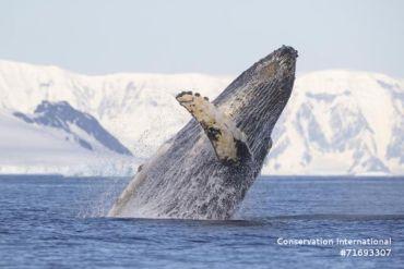 Blue Nature Alliance: Uno de los mayores esfuerzos para proteger el océano está en marcha