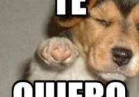 memes-romanticos41-520x245