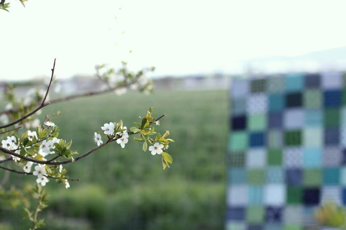 Blossoms quilt