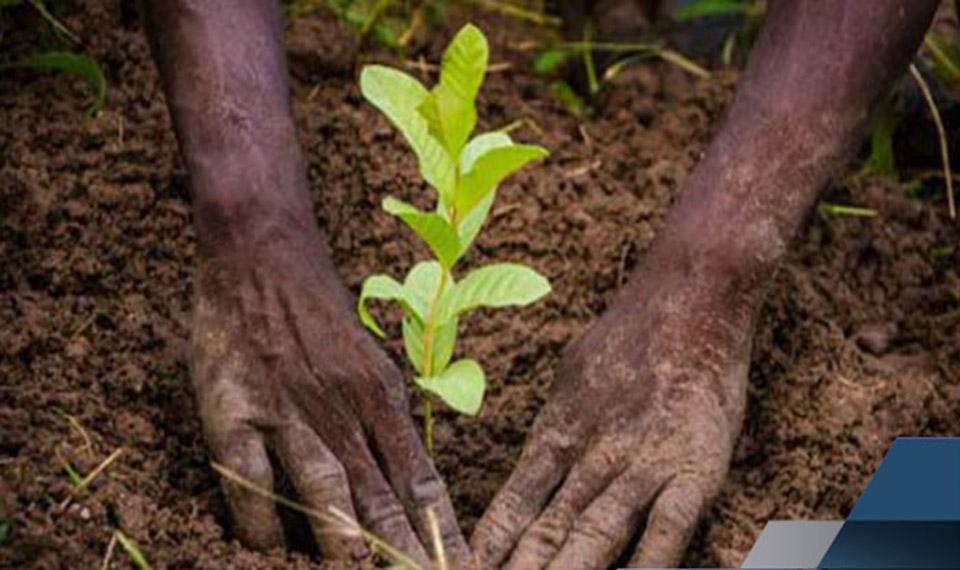 Diourbel : 400 000 plants prévus pour la campagne de reboisement (inspecteur)