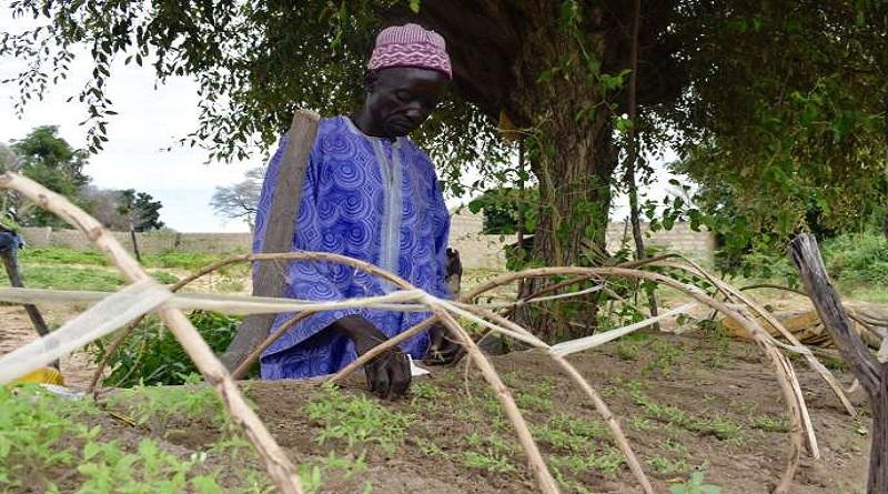 AGROÉCOLOGIE AU SENEGAL: miser sur l'agroécologie pour un développement plus durable