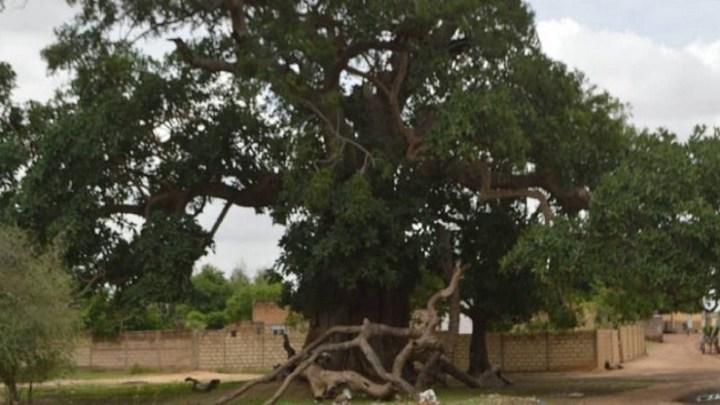 Diobass : une communauté, plusieurs ethnies