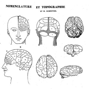Phrenology, nomenclature and topography, image