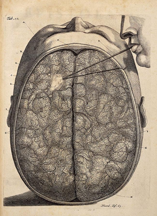 Frederik Ruysch (1638-1731). Plate