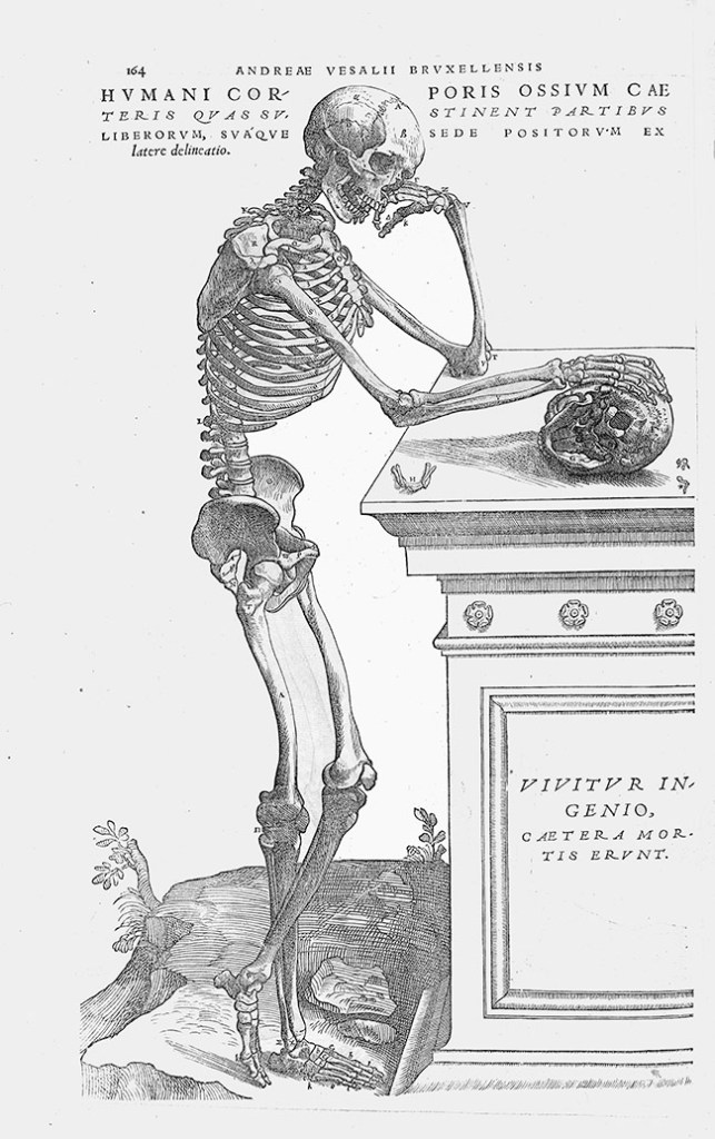 De humani corporis fabrica, 1543. Vesalius, Plate 164. Plate