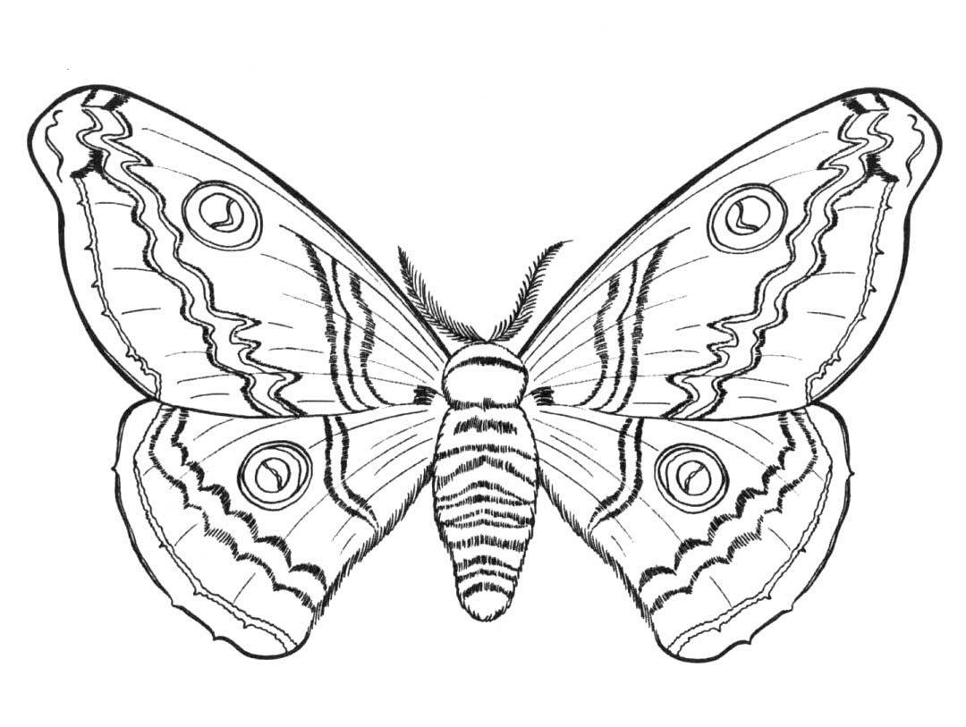Mariposa grande para colorear :: Imágenes y fotos