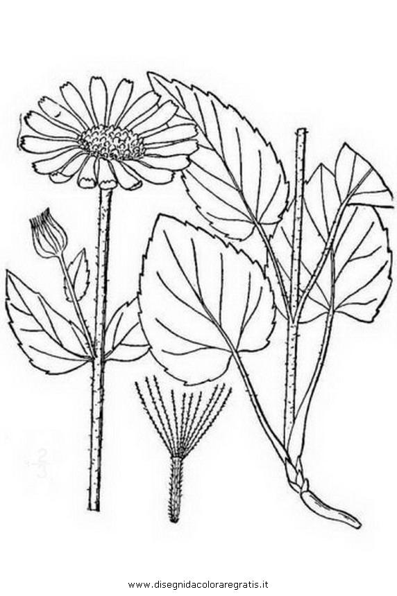 Dibujo Para Colorear Planta