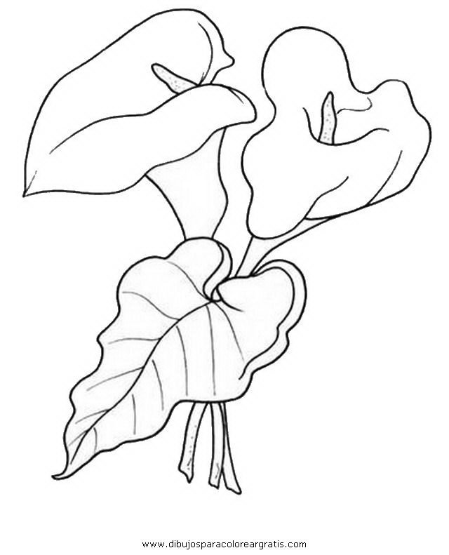 Dibujo alcatraz_10 en la categoria naturaleza diseños