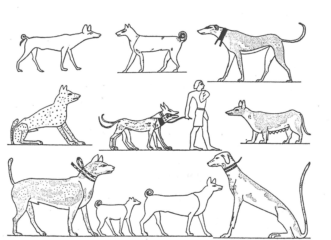 Sighthounds And Primitive Dogs In Italy And The