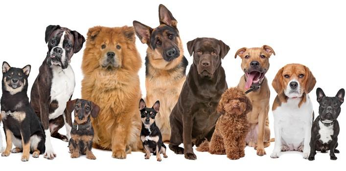 100 fatos interessantes sobre cães