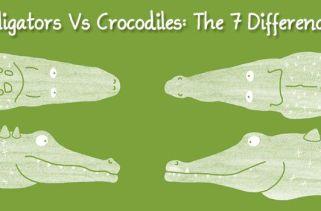 Jacarés Vs Crocodilos: As 7 Diferenças