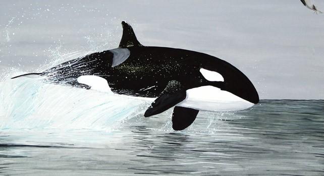 30 fatos malucos sobre baleias