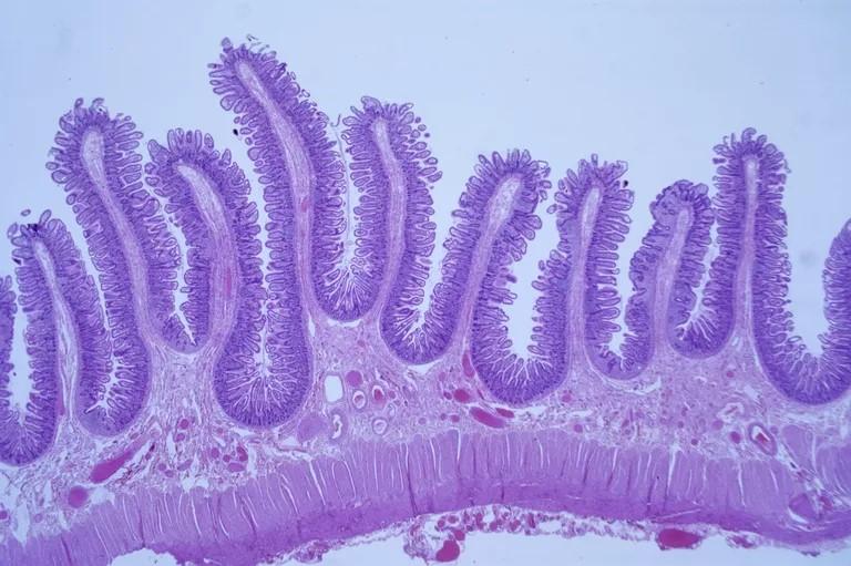 O que é histologia e como ela é usada