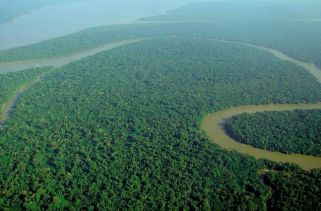 Países que Compartilham a Floresta Amazônica