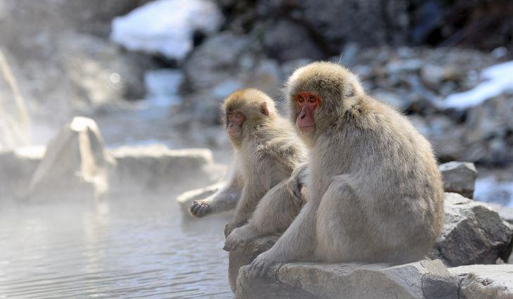 Animais Nativos Do Japão