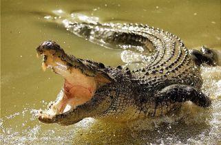 13 fatos interessantes sobre crocodilos