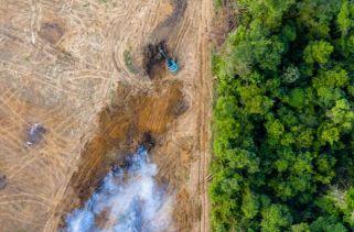O Que Aconteceria Se Perdêssemos A Floresta Amazônica?