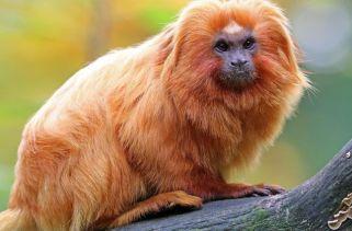 Quais Animais Vivem Na Floresta Amazônica?
