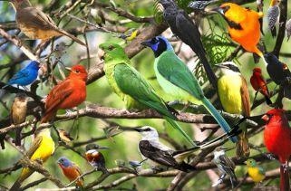 Os Pássaros São Mamíferos?