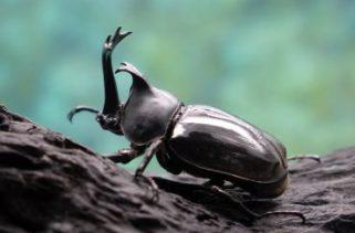 Para onde vão as moscas e os insetos durante tempestades?