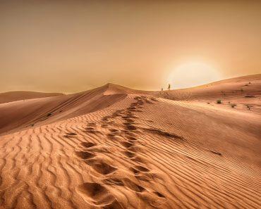Como é a vida nos desertos?
