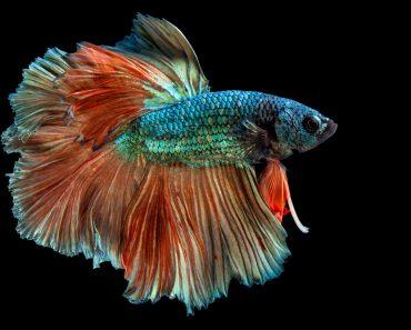 Quais são os diferentes tipos de escamas de peixe?
