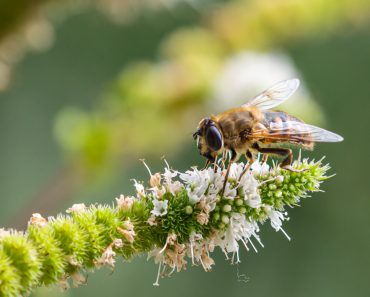 O que causa a perda de biodiversidade?