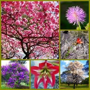 flora ameaçda de extinção no Brasil