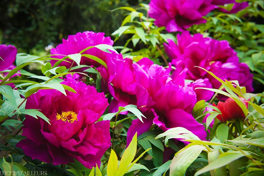 jardindesplantes03