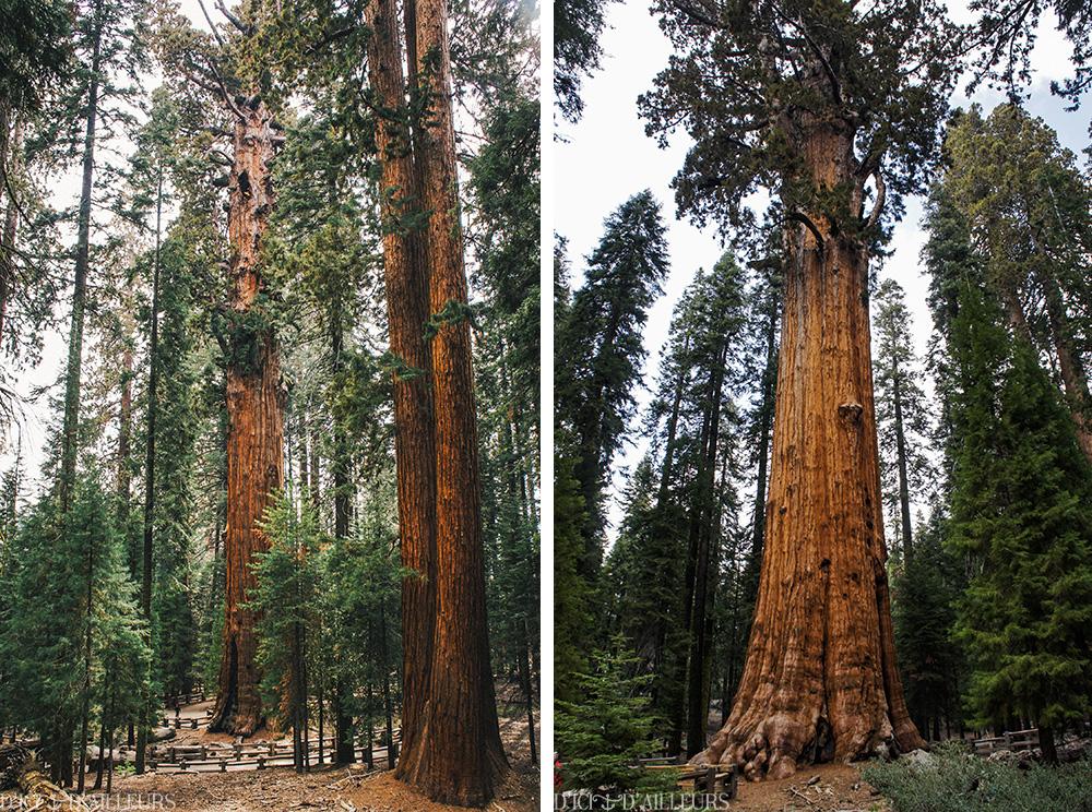 sequoia07b